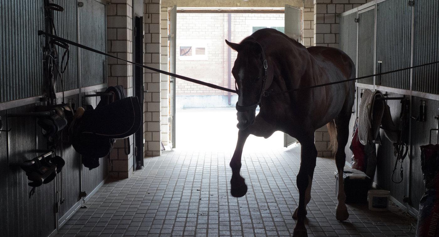 Лошадь российского троеборца Андрея Митина Гюрза