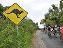 Пелотон во время первого этапа веломногодневки Тур Даун Андер
