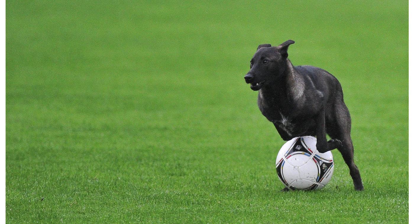 Собачка показала аргентинским футболистам, как необходимо обращаться смячом