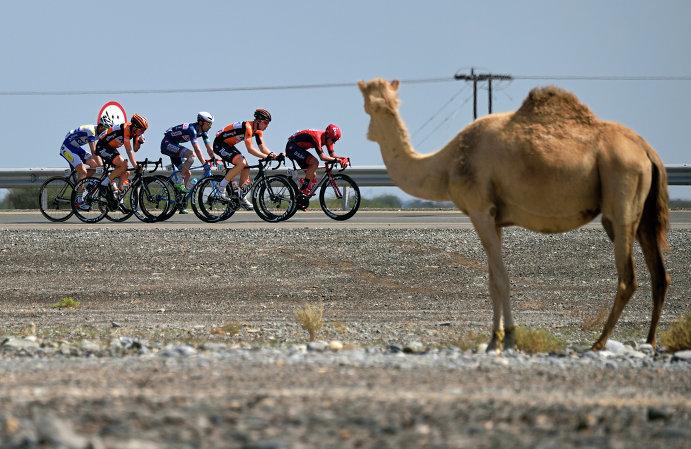 Велогонщики во время многодневки Тур Омана